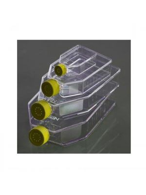 Cell Culture Flask, 75cm2 , Vented Cap, Non-Treated, For Suspension Cells, sterile, 5/pk, 100/cs